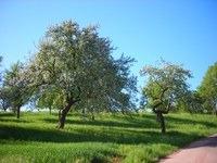 Plantations de haies, de vergers, alignement d'arbres,...